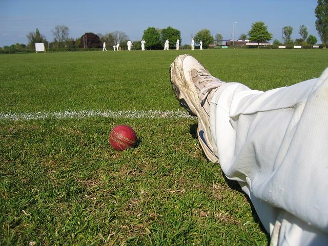 cricket-753938_640.jpg