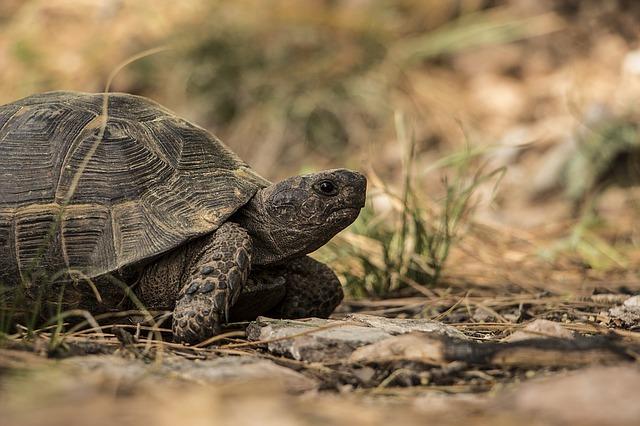 turtle-1309900_640.jpg